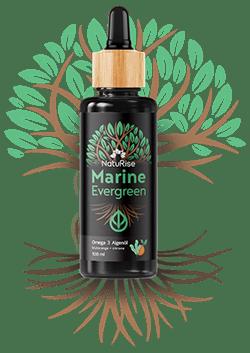 Marine Evergreen